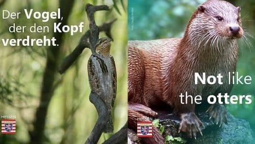 Beim Internet-Publikum funktioniert Wortwitz auf Kacheln auch auf Englisch. (c) Umweltministerium Hessen